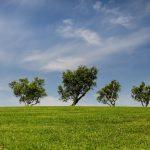 Le marché aux arbres s'adapte à la situation sanitaire