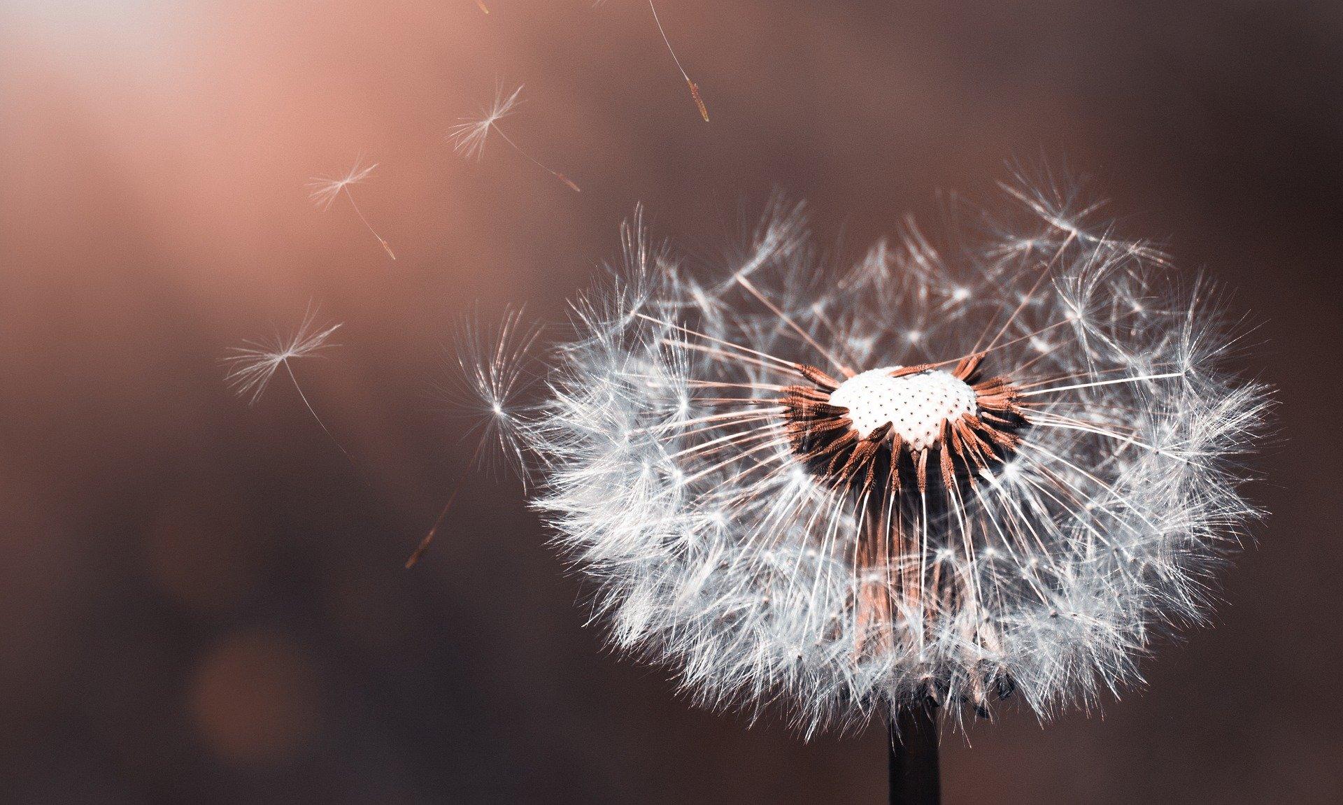Un jour, un poème : Olorime de Victor Hugo