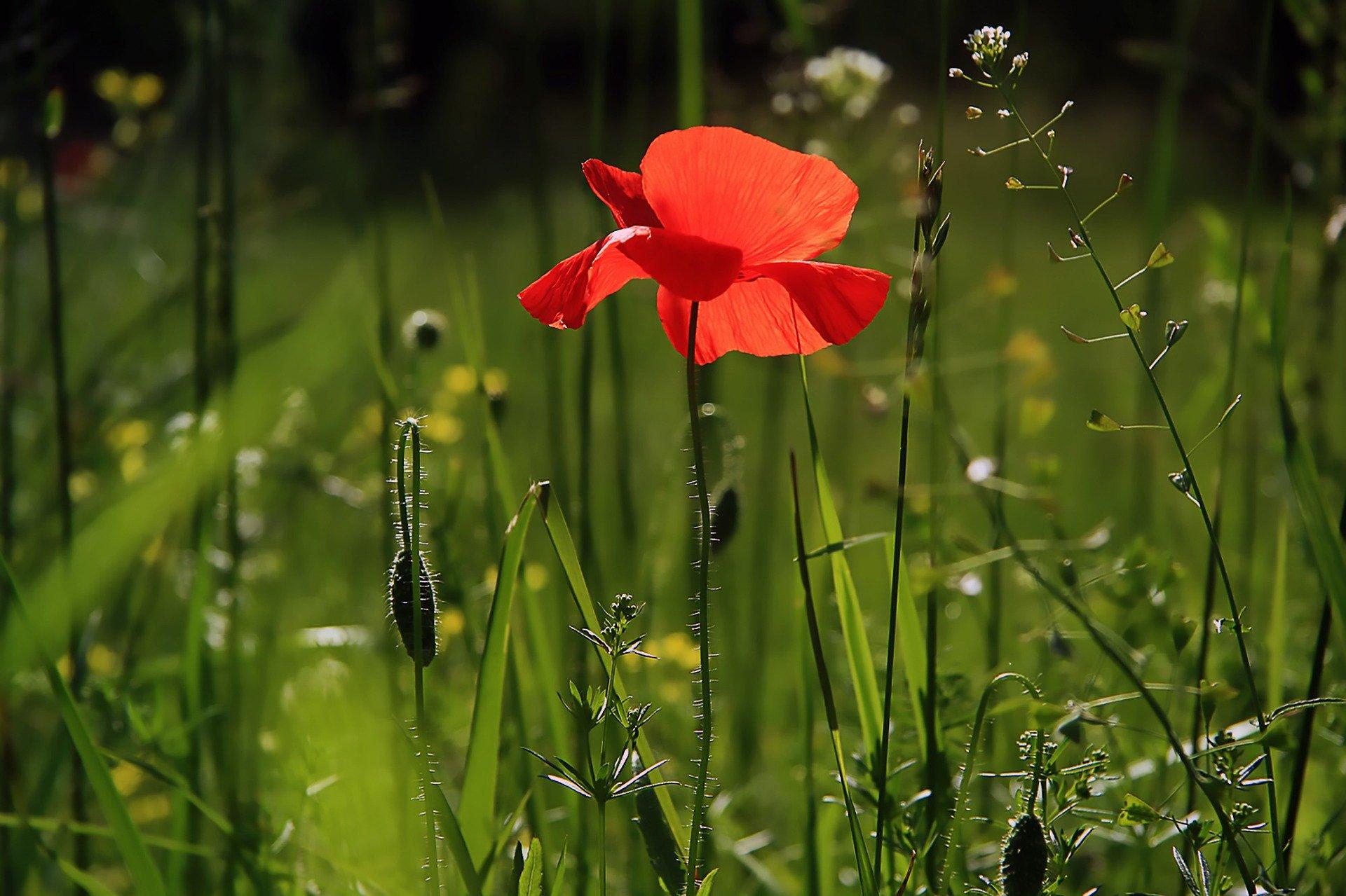 Un jour, un poème : Amphitryon