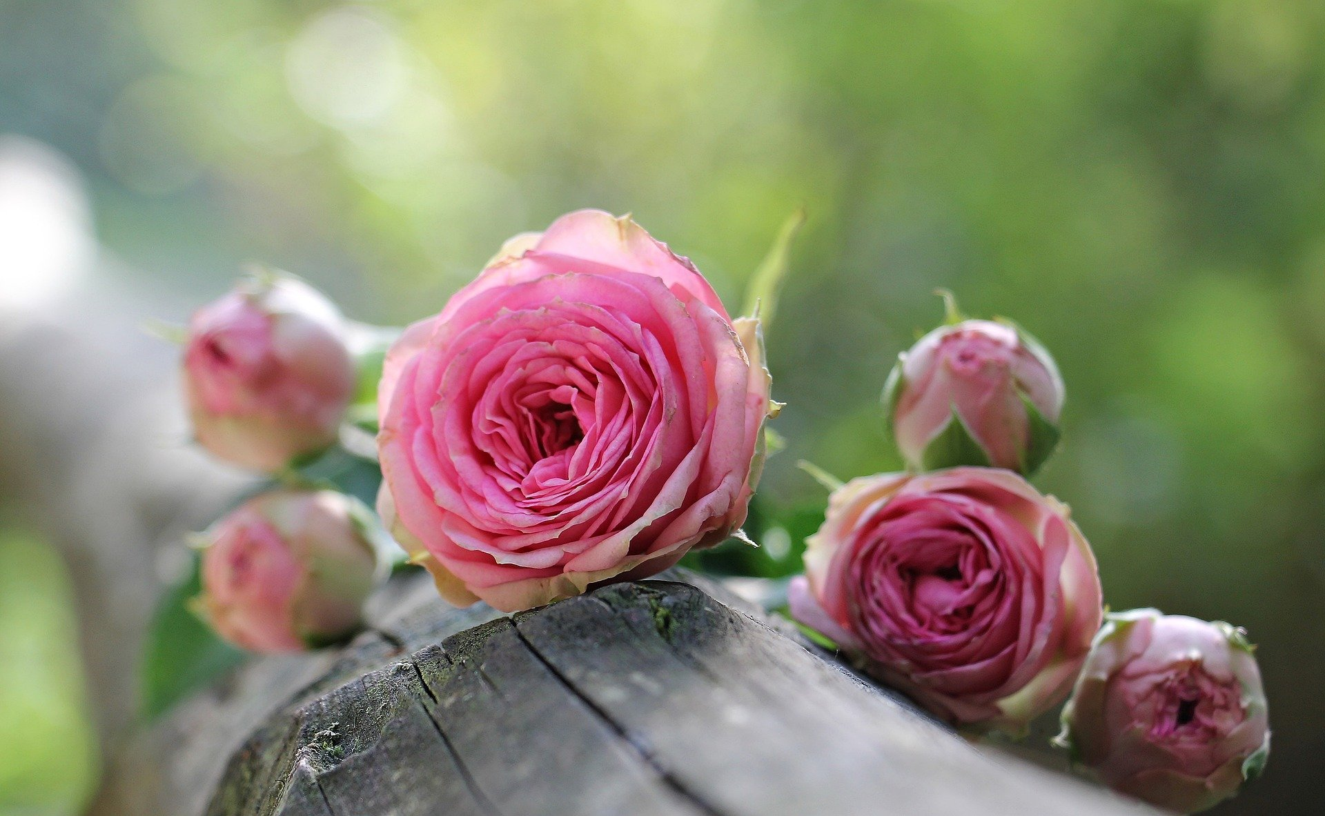 Un jour, un poème : Lettre à sa mère