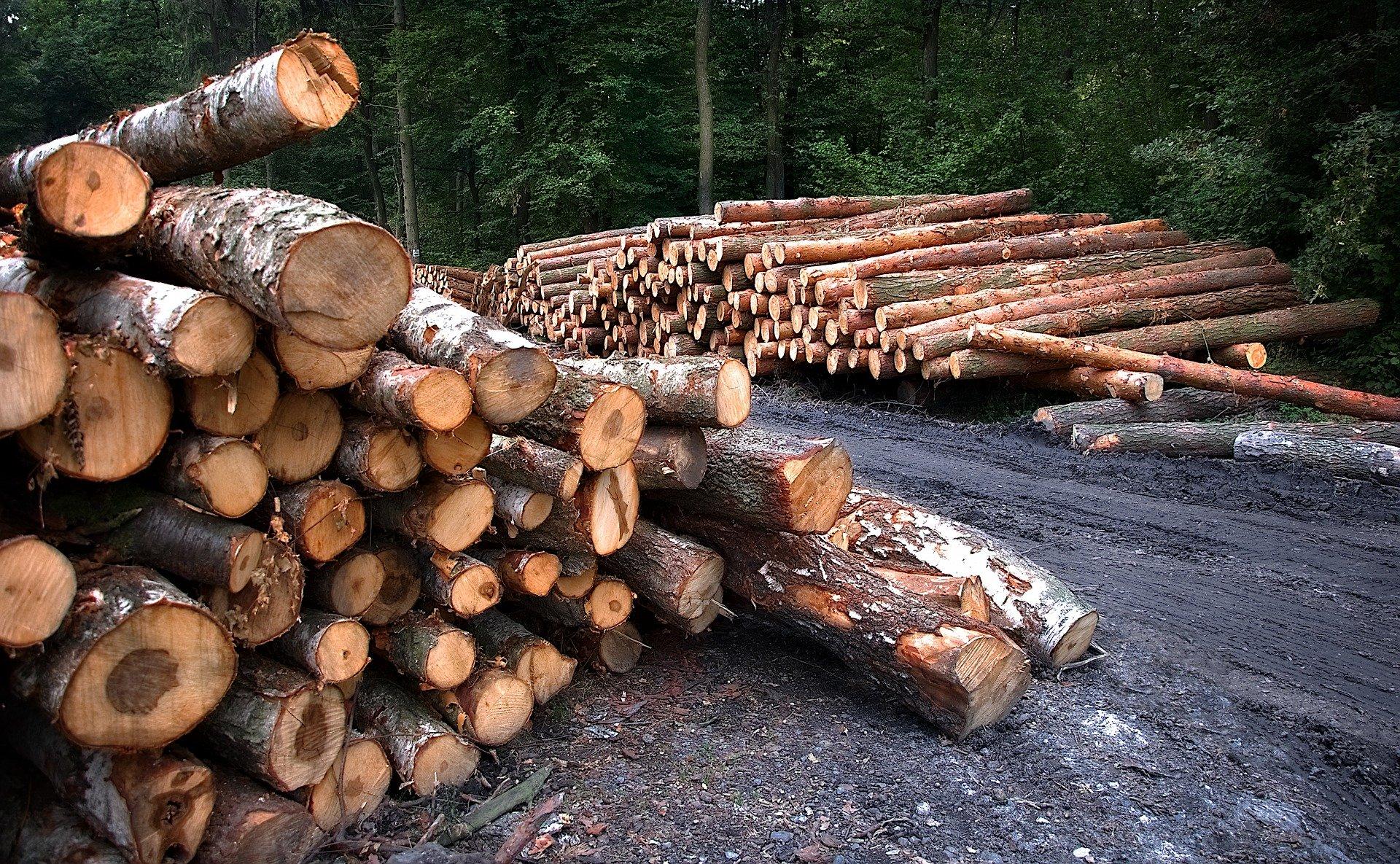 Coupe de bois – Secteur Verdèche